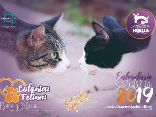 Calendario Colonias Felinas 2019